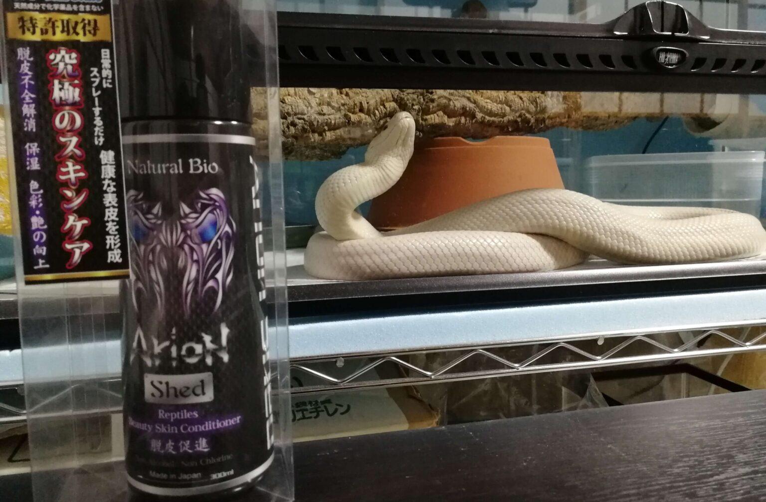 アリオンジェットと白い蛇